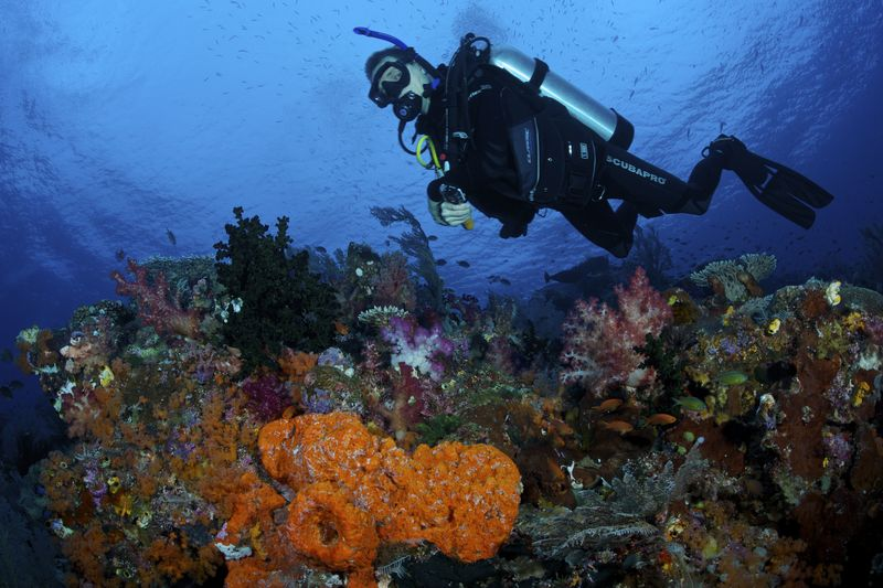 The Bird's Head Seascape is home to over 200 internationally acclaimed scuba diving sites.