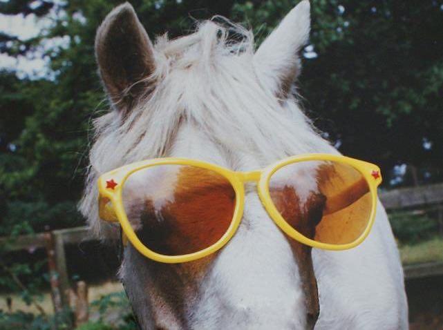 gafas-para-caballos