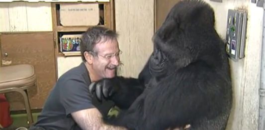 Robin Williams y Koko el Gorila