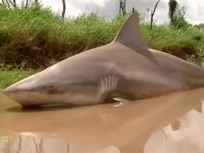 Sharknado ayr