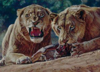 leones de Tsavo