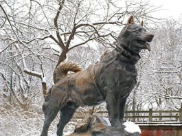 Balto el perro Husky