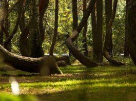 bosque retorcido