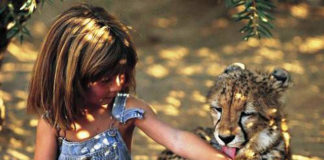 animales salvajes salvando a personas