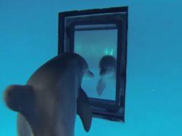 inteligencia de los delfines