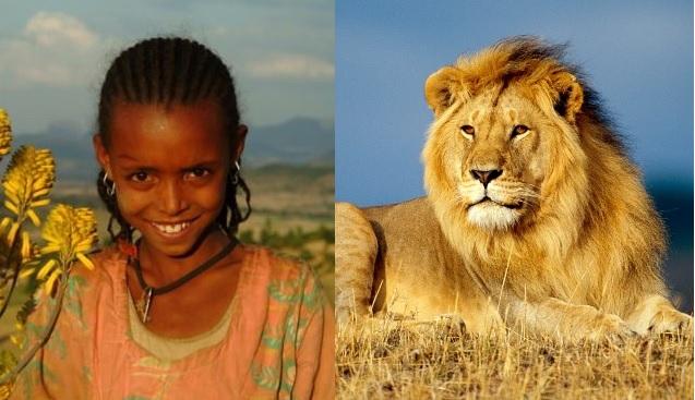 animales que salvaron a gente