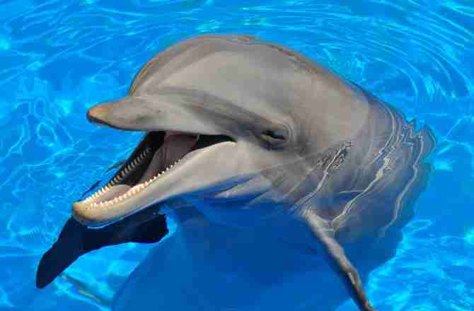 inteligencia delfines cerebro