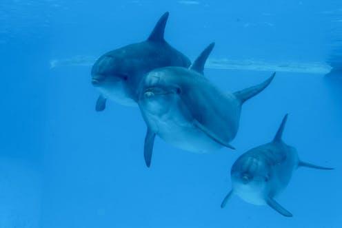 iq de un delfin
