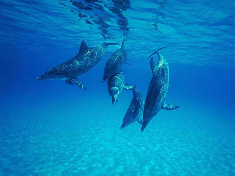 estudios delfines