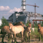 animales de Chernobyl