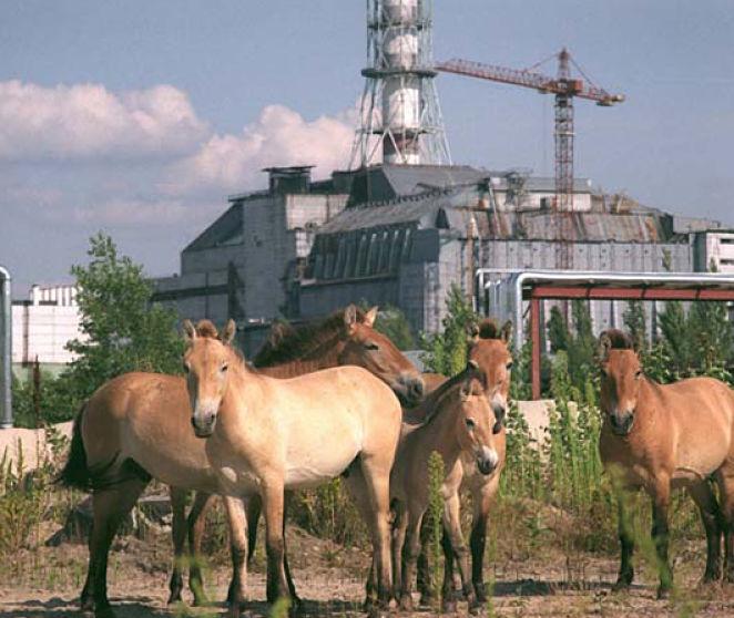 La Increíble Realidad de los Animales de Chernobyl - Flipada.com