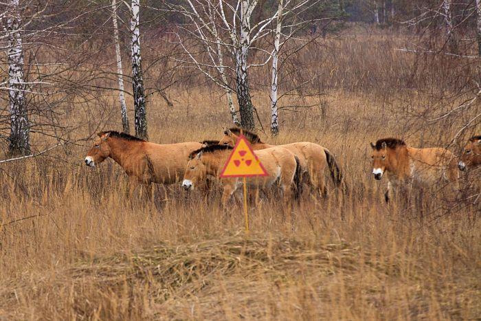 animales mutantes de chernobyl