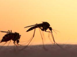 por qué los mosquitos pican más a unas personas que a otras