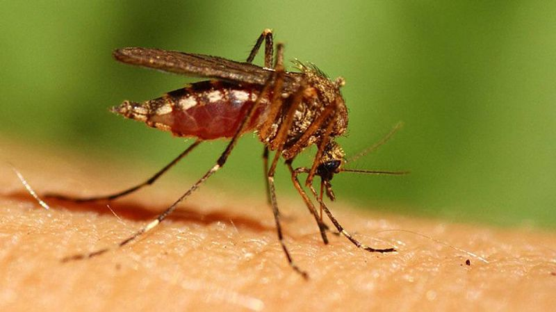 como evitar que me piquen los mosquitos