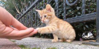 gatos cuando han comido