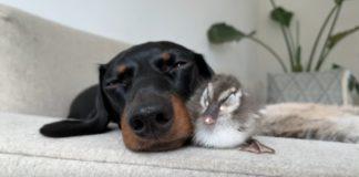 Pato y un Perro Salchicha