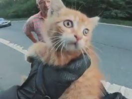 gato salvado en carretera