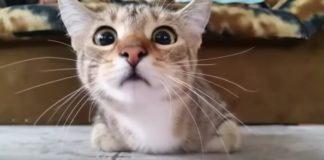 Gato Viendo una Película de Terror