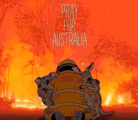 bomberos salvando un koala