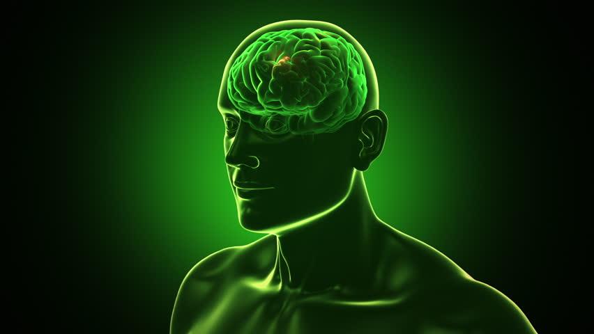 traduce las señales cerebrales en palabras