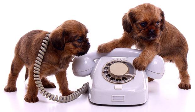comunicacion perros