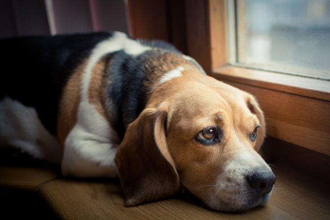 cosas que no sabias de los perros