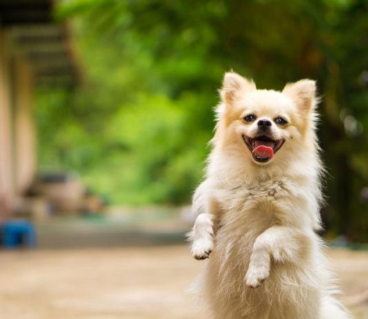 curiosidades de los perros