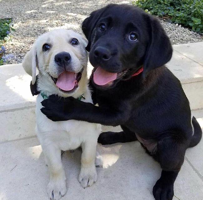 rarezas de los perros