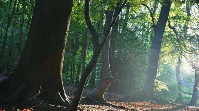 bosque de Bisham