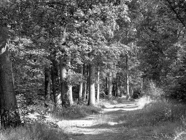 bosque de Derin