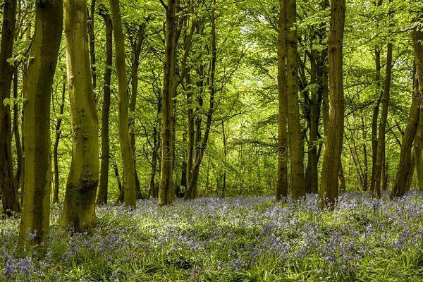 bosque de Epping