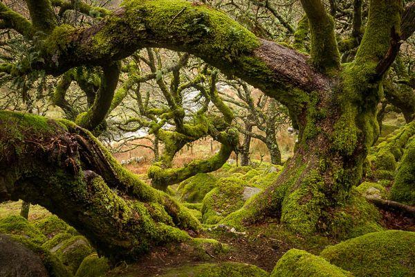 bosque de Wistman
