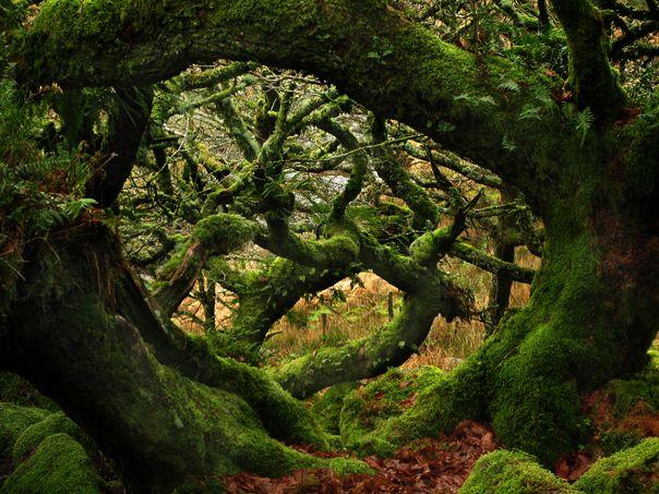 bosque de las brujas