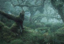 bosques encantados de Gran Bretaña