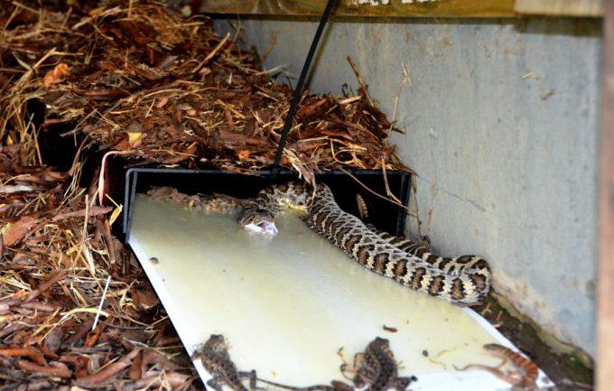 trampas serpientes