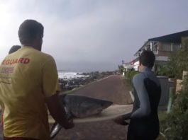 Salvamento de un bebe tiburón