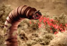 gusano de la muerte de Mongolia