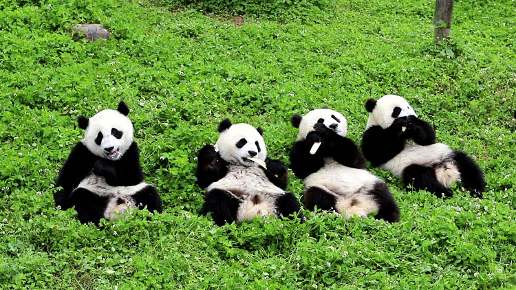 noticias de pandas