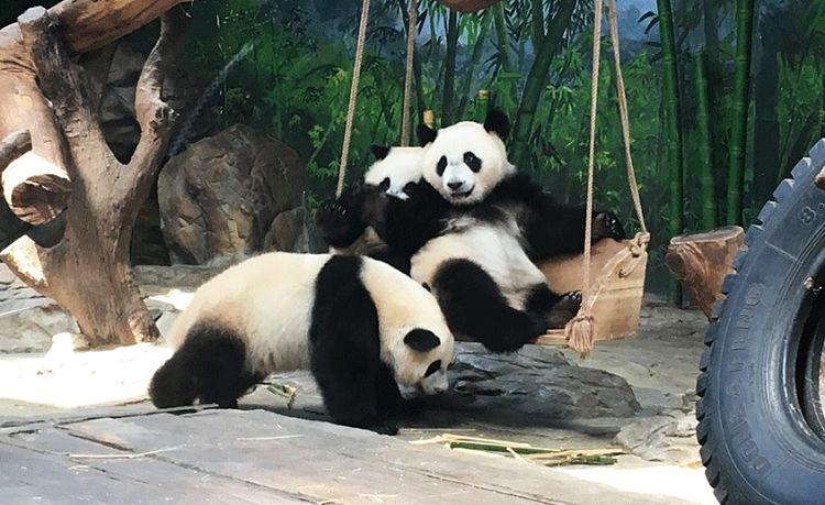 preguntas sobre pandas