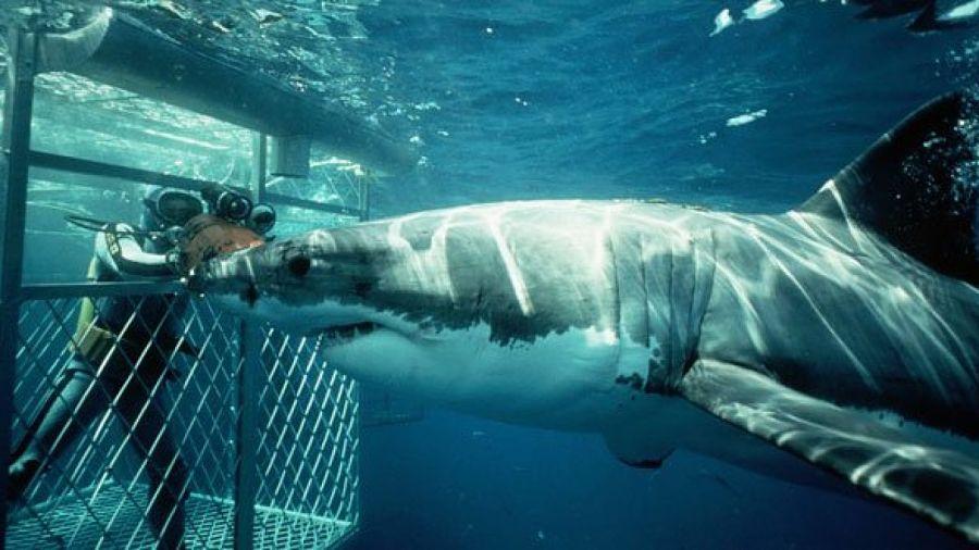 callejon de los tiburones