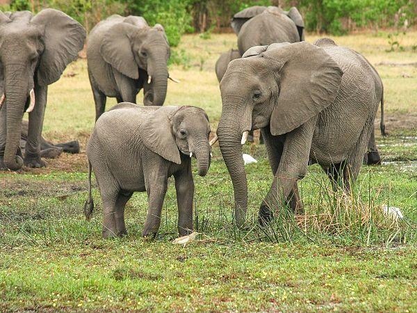 caracteristicas de los elefantes