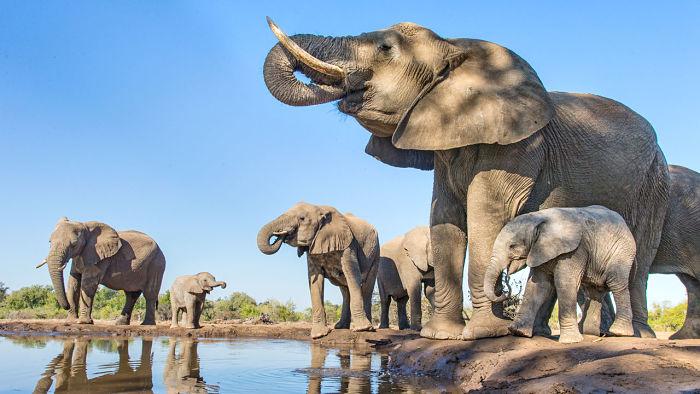 curiosidades de los elefantes