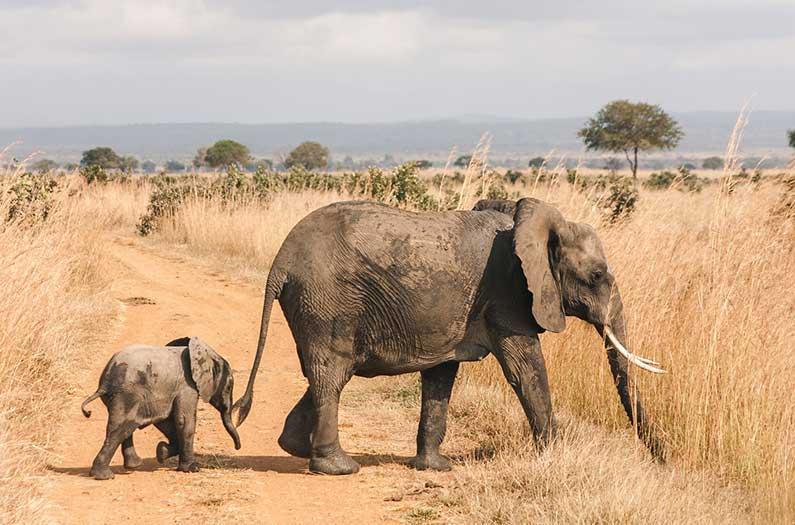 donde viven los elefantes