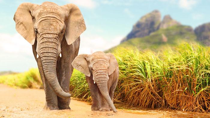 elefantes grupo