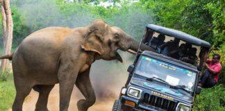 elefante es el verdadero rey de la selva