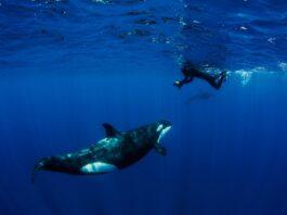 encuentros con orcas