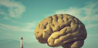 curiosidades sobre el cerebro humano